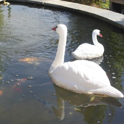 SWANS FOR PONDS