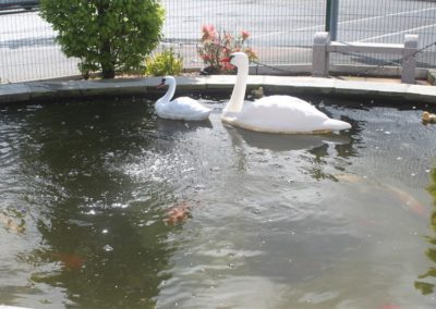 POND WITH SWANS