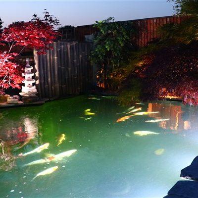 Pond & Fish Treatments