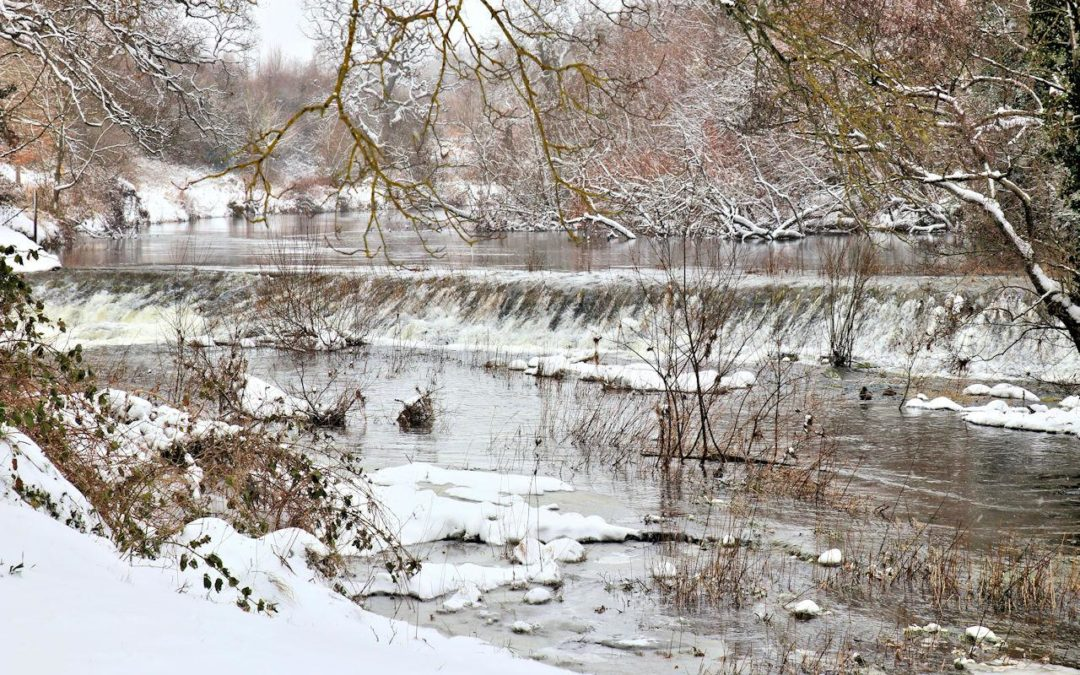 TIPS FOR A HEALTHY POND IN WINTER!